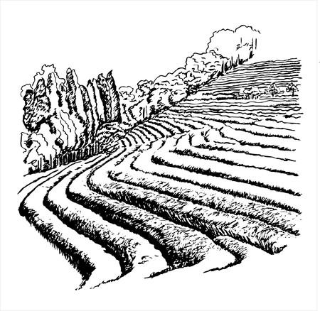Theeaanplantingen - vectorillustratie