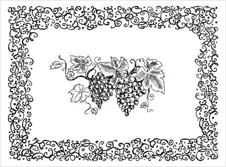 Creative grape frame photo