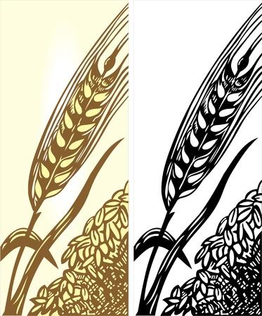 wreath of wheat: wheat illustration