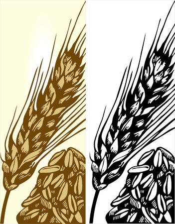 wheat illustration: grano illustrazione Vettoriali