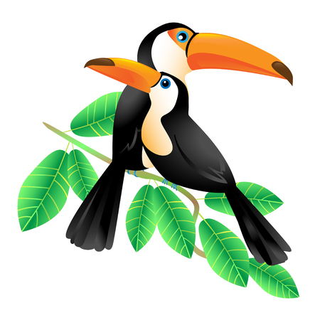 Two colorful toucans sitting on a  branch, isolated on white Vector