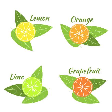citrus fruits: Vector citrus fruits orange, lime, grapefruit and lemon illustation