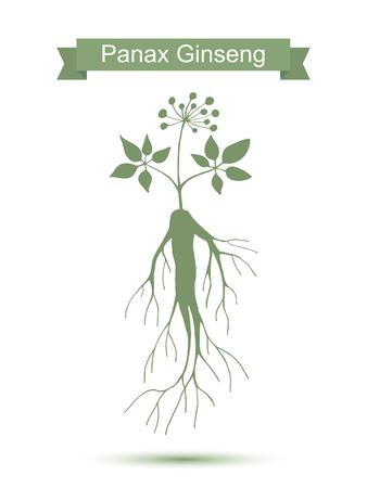 Silueta de Panax ginseng raíz con las hojas. Vector planta verde aislado sobre fondo blanco. Planta medicinal. Estilo de vida saludable