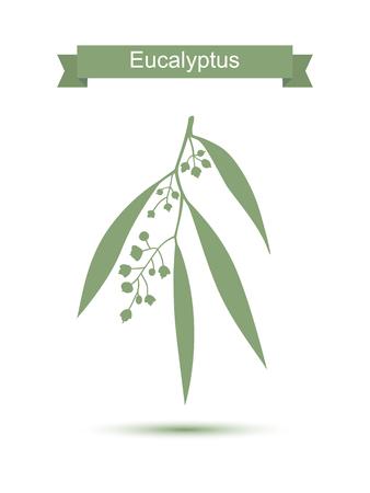 Eucalyptus. Vector illustratie op een witte achtergrond. Medicinale plant. Gezonde levensstijl Stock Illustratie