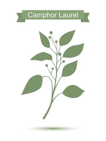 Camphor laurel branch. Green silhouette of Camphor laurel. Vector illustration Illustration