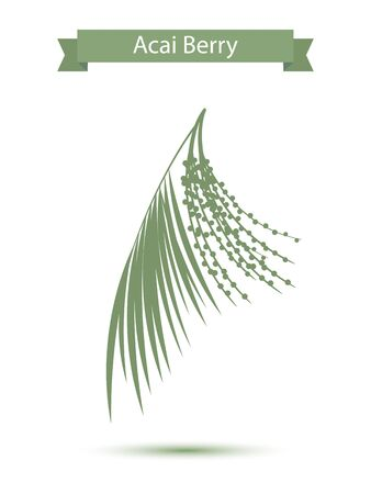 acai: Acai palm leaves and acai berries vector illustration isolated on white background. Superfood acai green silhouette berry