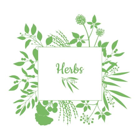 fresh herbs: Fresh herbs store emblem. Green square frame with collection of plants. Silhouette of branches isolated on white background Illustration