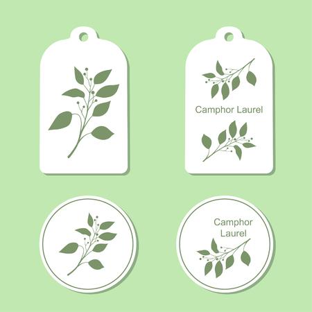 laurel branch: Camphor laurel branch. Green silhouette of Camphor laurel. Vector illustration. Tags and Labels