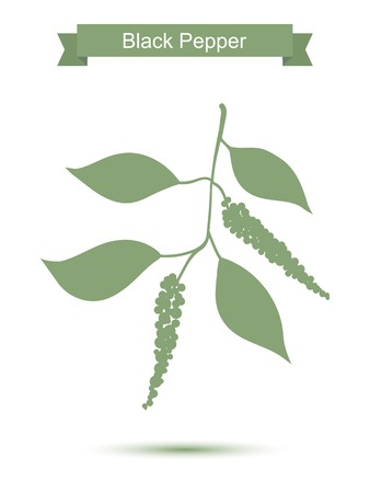 black pepper: Black pepper branch. Green silhouette of pepper. Vector illustration