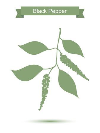 Schwarzer Pfeffer Zweig. Grüne Silhouette von Pfeffer. Vektor-Illustration