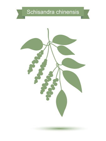 flavor: Branch with berries of Chinese Schisandra. Five flavor berry plant silhouette. Vector illustration isolated on white Illustration