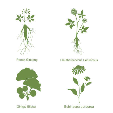 Silhouette of plants, vector illustration isolated white