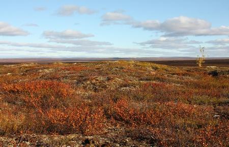 tundra: Tundra