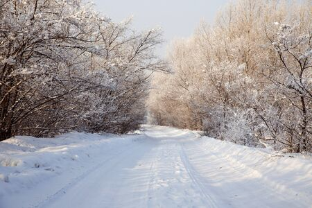 winter road: winter road in the woods