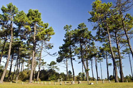 The picnic area is in the border of the forest in the east Yeu island wooden tables are available Surrounded by pine trees marine France Vendee Pay Loire is blue sky at background 写真素材