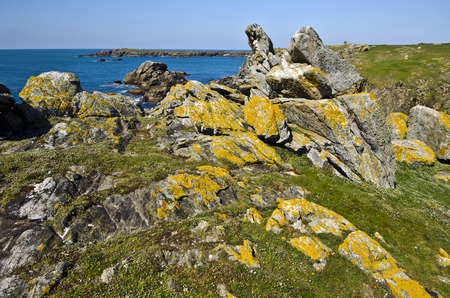 advances: Wild Rocky Coastline in South of Yeu Island with spring flowers and green plants at foreground. France Vendee Pay loire Stock Photo