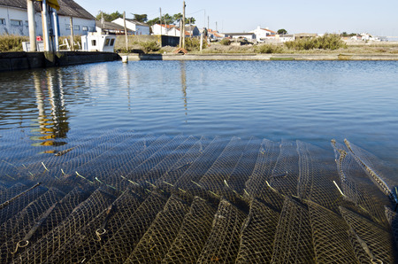 vendee: Pool of Oyster farm with cages Containing growing oysters under the water. Farmers town is at Fromentine France Vendee Pay background of the Loire