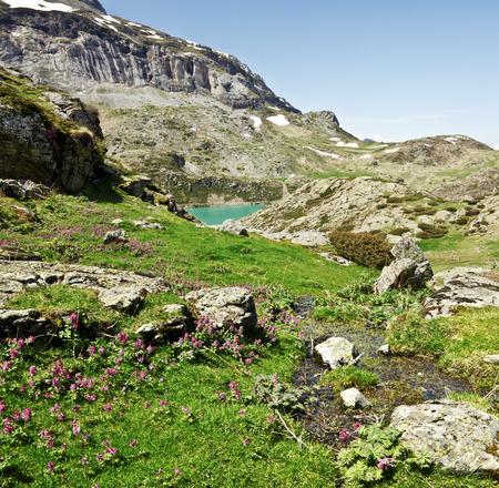 cours d eau: Violet fleurs sauvages d'orchid�es et le printemps v�g�tation verte et cours d'eau Estaube cirque dans le lac et les pentes des montagnes sont Gloriettes � fond. Top Pyrenees France