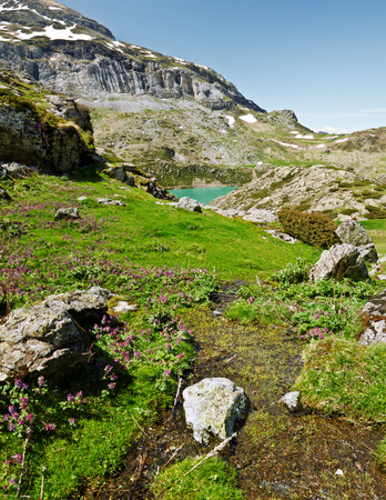 watercourse: Purple wild orchid flowers and spring green vegetation and watercourse Estaube circus in the lake and mountain slopes are Gloriettes at background. Top Pyrenees France