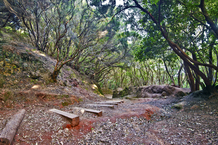 laurel mountain: Walking pass with wooden steps through humid subtropical laurel forest in mountain massif Anaga in Tenerife island, Spain Stock Photo