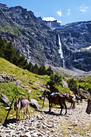 great pyrenees: Ass and Horses in approach to Gavarnie Circus in French Pyrenees, famous waterfall Grande Cascade de Gavarnie is at background, Hautes-Pyrenees, France