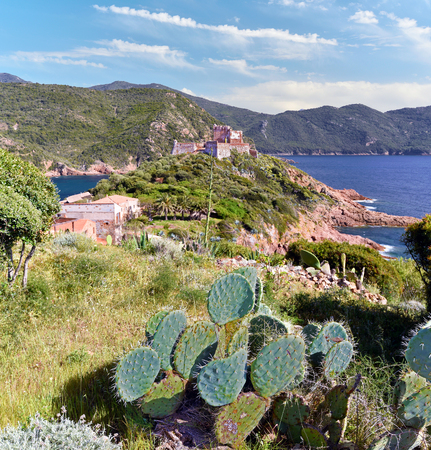 View at Girolata harbor and its Genoese Tower, the cactus plant as at foreground, Corsica Island, Corse-du-Sud, France Stock Photo