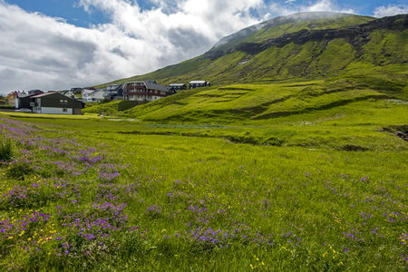 Hvalvik village landscape of Faroese island Streymoy, flowery grassland is at foreground. Banque d'images - 116164341