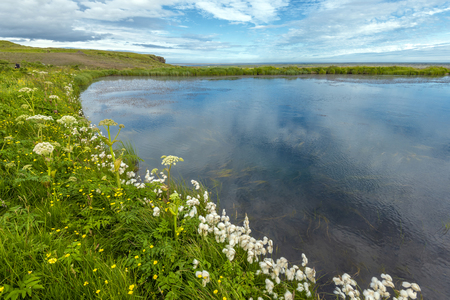 Green and flowering border of Systravatn lake. Kirkjubaejarklaustur village in Skaftarhreppur municipality of Southern Iceland. Фото со стока