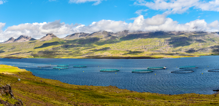 Fish farm close to Djupivogur town in Eastern Iceland as part of Berufjordur fjord landscape. The eastern coastline of the fjord is at background. 写真素材 - 125486053