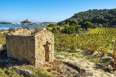 Vineyard area in Narbonne region, the ruined hut is at foreground and Gruissan town and lagoon are at left background. Occitanie, France.