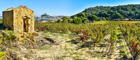 Panoramic view at Vineyard area in Narbonne region, Gruissan town and lagoon are at left background. Occitanie, France. 写真素材