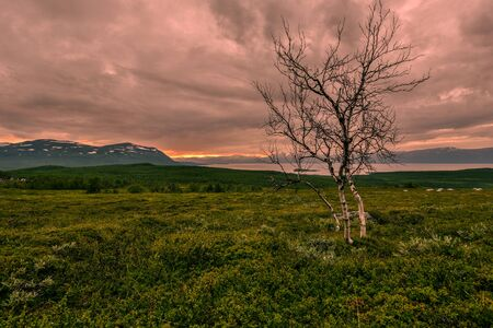 The landscape of Abisko National park in Northern Sweden as seen from Paddus viewpoint in the direction of Tornetrask lake in sunset light. The Nordic Birch Tree is at Foreground.
