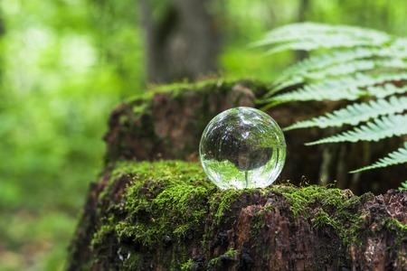 自然、緑の森のコンセプトです。葉を持つ木切り株の水晶玉。木の切り株にガラス玉は、苔で覆われて。