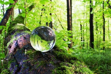 il concetto di natura, verde foresta. Palla di vetro su un tronco d'albero coperto di muschio verde. I funghi che crescono su un tronco d'albero. Archivio Fotografico