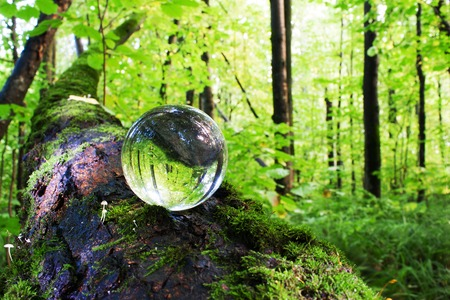 the concept of nature, green forest. Glass ball on a tree trunk covered in green moss. Mushrooms growing on a tree trunk. Stock Photo