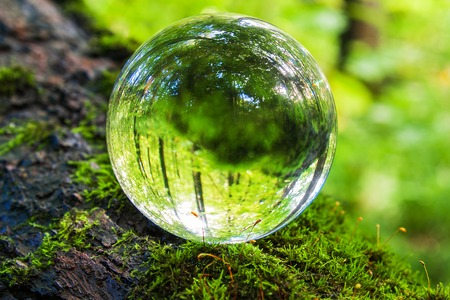 the concept of nature, green forest. Glass ball on a tree trunk covered in green moss. Mushrooms growing on a tree trunk. Foto de archivo