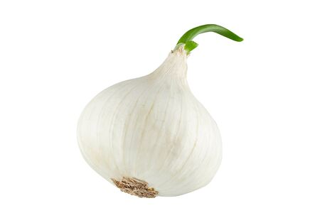 White onion with green sprout. Stock Photo
