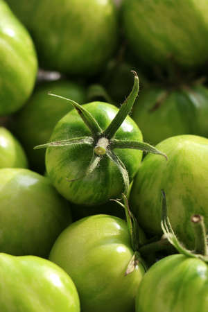 The harvest of tomatoes. High quality photo. Green tomato