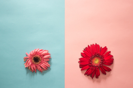 minimalist Flat lay, pastel colors, gerbera, fresh and faded Stock fotó