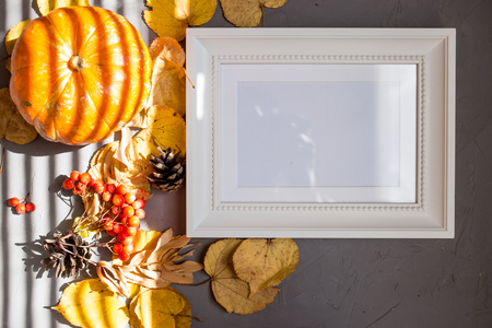 Colorful autumn pattern made of pumpkins, cones, leaves and rowan on gray background. White frame, copy space. Flat lay. Sunlight