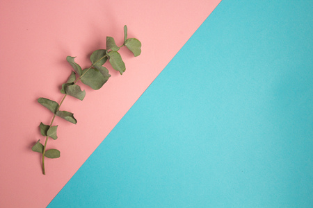 Flat lay pastel composition. background witha sprig of eucalyptus on blue pink background
