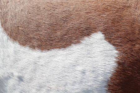 Background texture of the skin and wool of a pig, horse or cow.