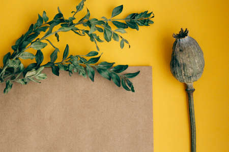 greeting card with green branches on yellow brown background copy space