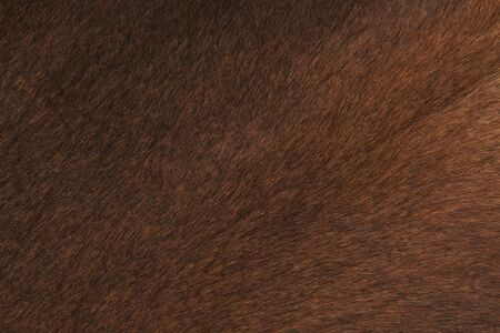 cow skin: a closeup of brown cow skin