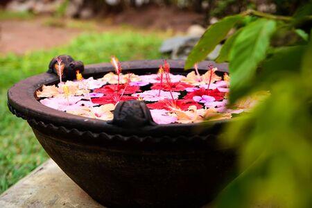 flores exoticas: Flores ex�ticas para meditatition