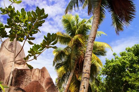 anse: Palm trees and rock in the natural park at Anse source d