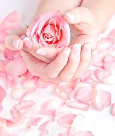 Sch�ne H�nde mit Franz�sisch Manik�re holding rose