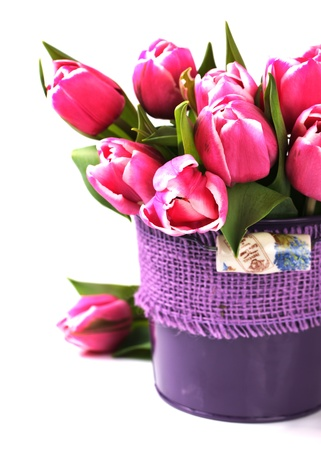 Group of fresh pink tulips in a vase on a white background with copy space