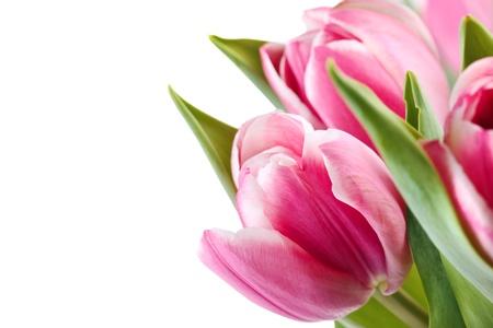Blumenstrau� aus rosa Tulpen isoliert Lizenzfreie Bilder