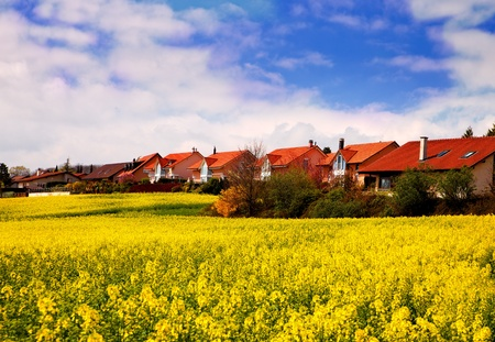 oilseed rape: yellow field of rapeseed, canoa at spring time in swiss village Stock Photo